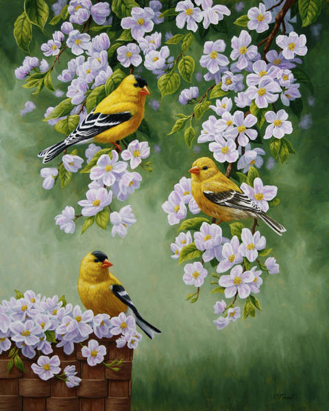 Fruit Trees Wall Art - Painting - American Goldfinches And Apple Blossoms by Crista Forest