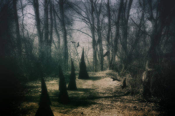 Woods Photograph - American Horror Story - Coven by Tom Mc Nemar