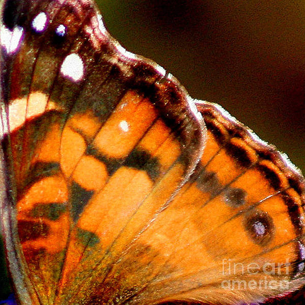Photograph - American Lady Butterfly Wing Square by Karen Adams