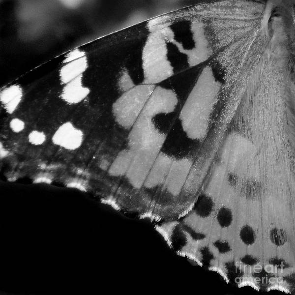 Photograph - American Painted Lady Butterfly Wing Black White Square by Karen Adams