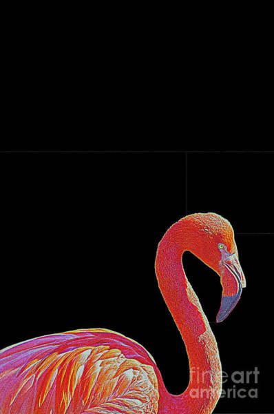 Bolivia Mixed Media - American Pink Flamingo by Celestial Images