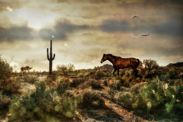 Wall Art - Photograph - American Southwest 1 by Lori Deiter
