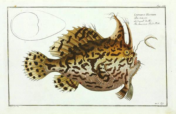 American Toad-fish Art Print