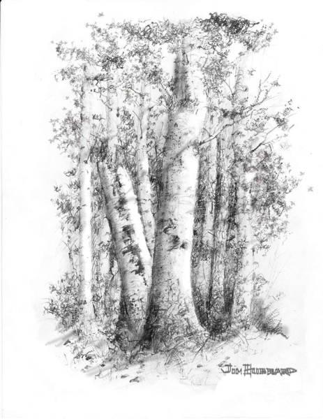 Wall Art - Drawing - American White Birch by Jim Hubbard