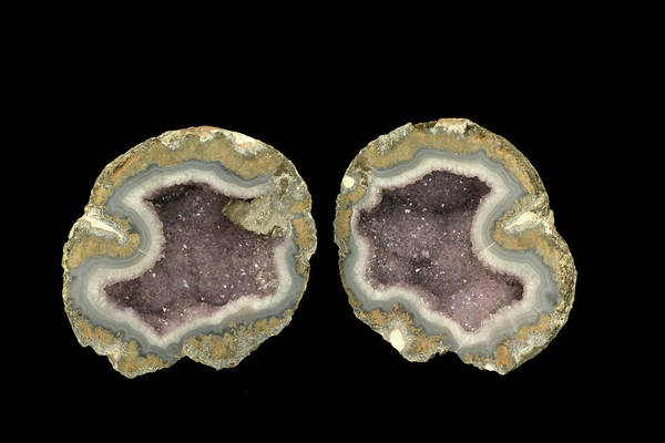 Geodes Photograph - Amethyst Geode Opened by Science Stock Photography/science Photo Library