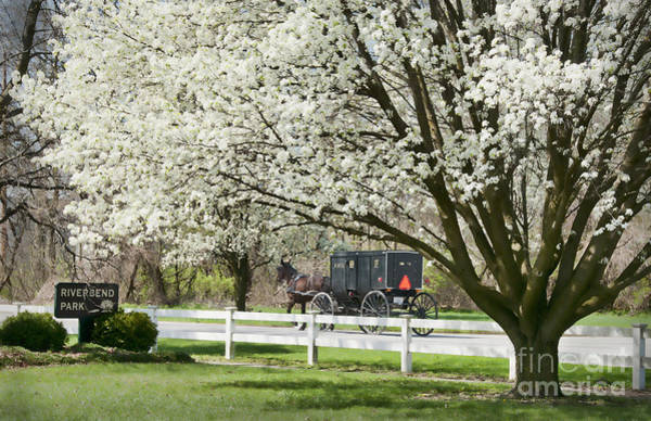 Wall Art - Photograph - Amish Buggy Fowering Tree by David Arment