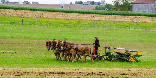 Photograph - Amish Farmer by Guy Whiteley