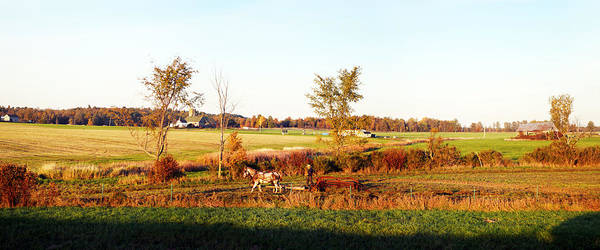 Plow Horses Photograph - Amish Farmer Plowing A Field, Usa by Panoramic Images