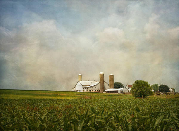 Corn Field Photograph - Amish Farmland by Kim Hojnacki