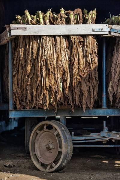 Pennsylvania Barn Photograph - Amish Tobacco Farm by John Greim/science Photo Library