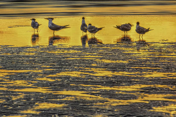 Tern Wall Art - Photograph - Among Friends by Marvin Spates