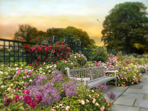 Sly Photograph - Among The Roses by Jessica Jenney