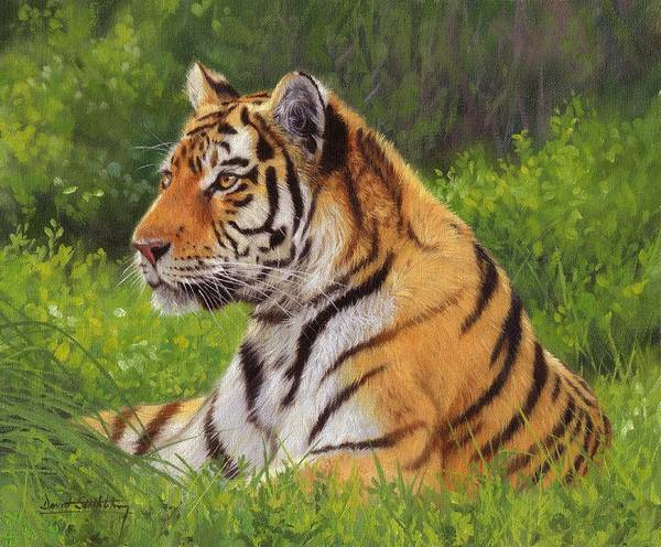 Siberian Tiger Wall Art - Painting - Amur Tiger Painting by David Stribbling