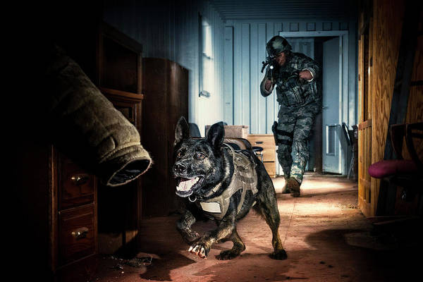 Dog Training Photograph - An Air Force Security Forces K-9 by Stacy Pearsall