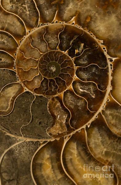 Photograph - An Ancient Ammonite Pattern II by Jaroslaw Blaminsky