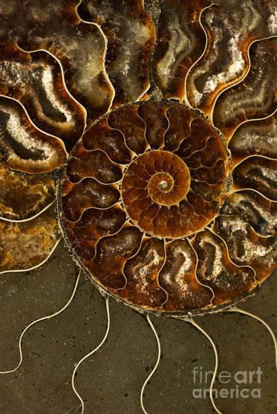 Photograph - An Ancient Ammonite Pattern IIi by Jaroslaw Blaminsky