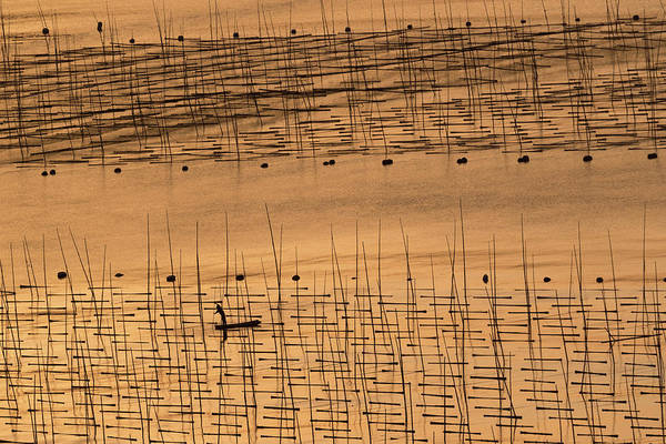 Wall Art - Photograph - An Aquaculture Farmer And His Farm Under Sunset by Cheng Chang
