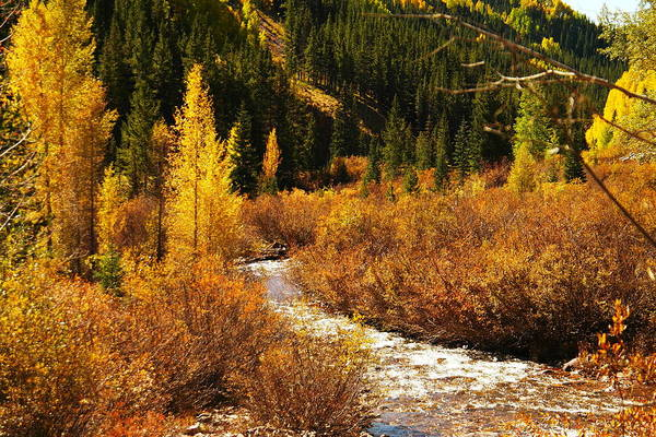 Swan Valley Photograph - An Autum Stream In Colorado by Jeff Swan