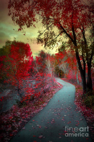 Photograph - An Autumn Eve by Tara Turner