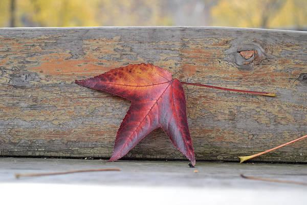 Photograph - An Autumn Memory by Melanie Moraga