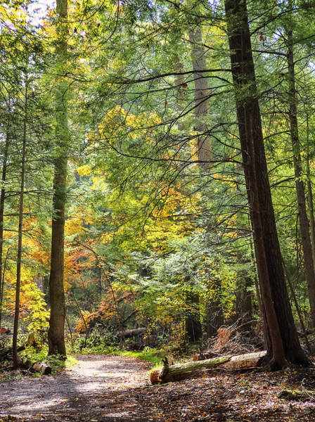 Swallow Falls State Park Wall Art - Photograph - An Autumn Path by SCB Captures
