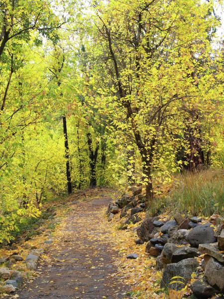 Photograph - An Autumn Stroll by Harold Rau