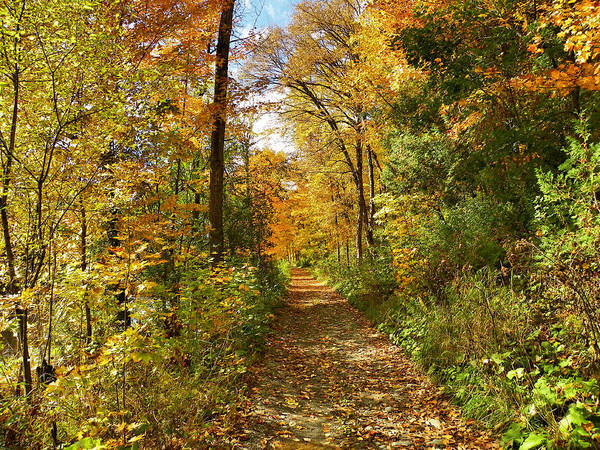 Houlton Photograph - An Autumn Walk by Gene Cyr
