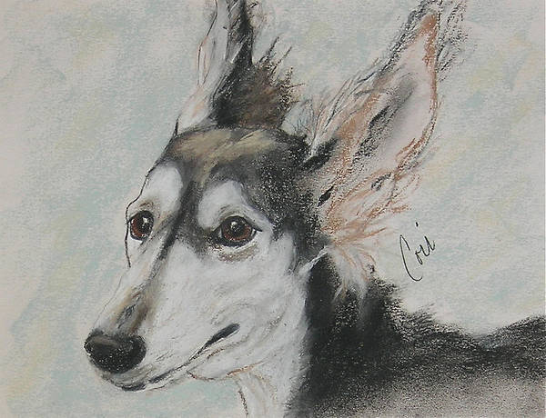 Saluki Drawing - An Ear Full by Cori Solomon