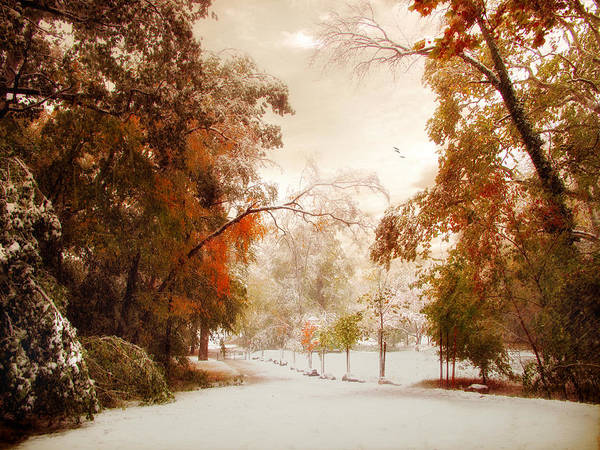 Photograph - An Early Winter by Jessica Jenney