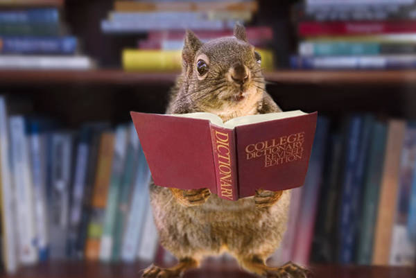 Photograph - An Educated Squirrel by Peggy Collins