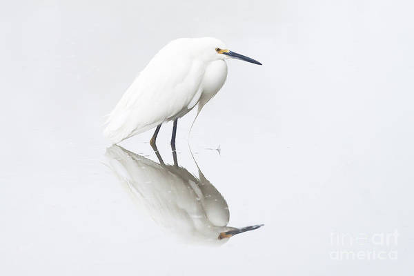 Wall Art - Photograph - An Egret And An Overcast Day by Ruth Jolly