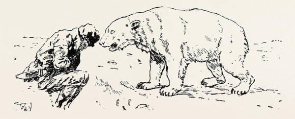 Polar Bear Drawing - An Encounter With An Polar Bear by English School
