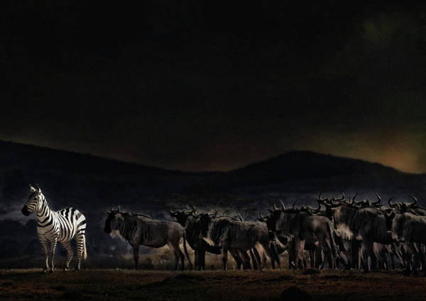 Wall Art - Photograph - An Evening In Kenya by Piet Flour
