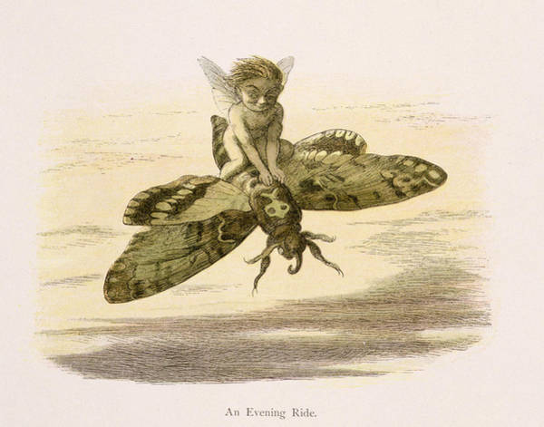 Butterfly Drawing - An Evening Ride, Illustration From In by Richard Doyle