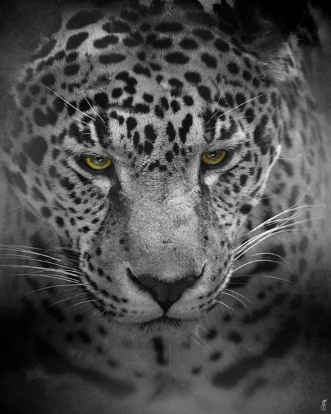 Photograph - An Intense Stare - Wildlife - Leopard by Jai Johnson