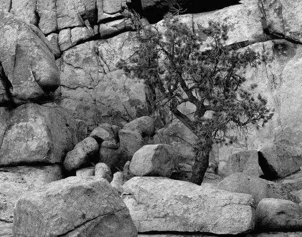 Photograph - An Isolated Pinon Pine by Paul Breitkreuz