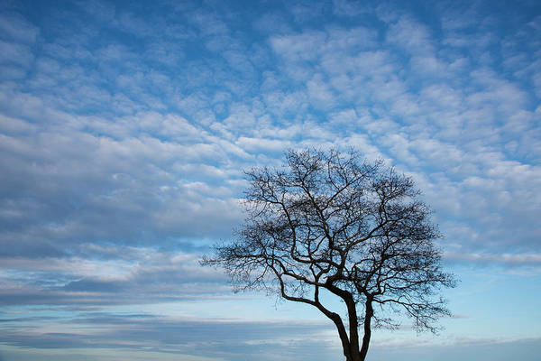 Wall Art - Photograph - An Oak Tree On Masons Island by Michael Melford
