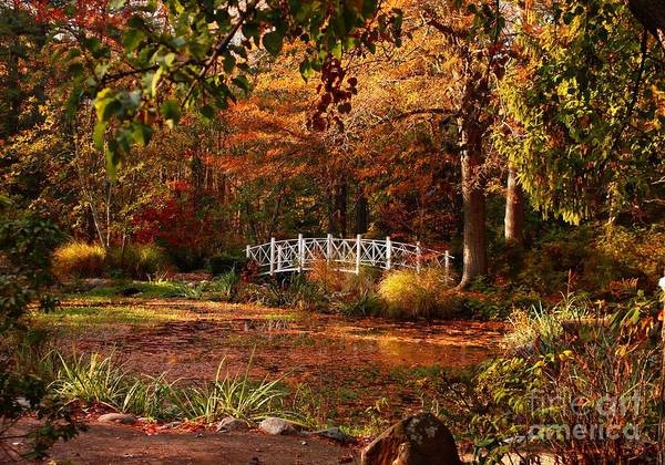 Photograph - An Oasis by Marcia Lee Jones