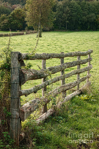 Entry Photograph - An Old Gate by Olivier Le Queinec
