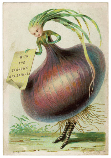 Bulb Drawing - An Onion Bulb Lady In Tightly  Laced by Mary Evans Picture Library