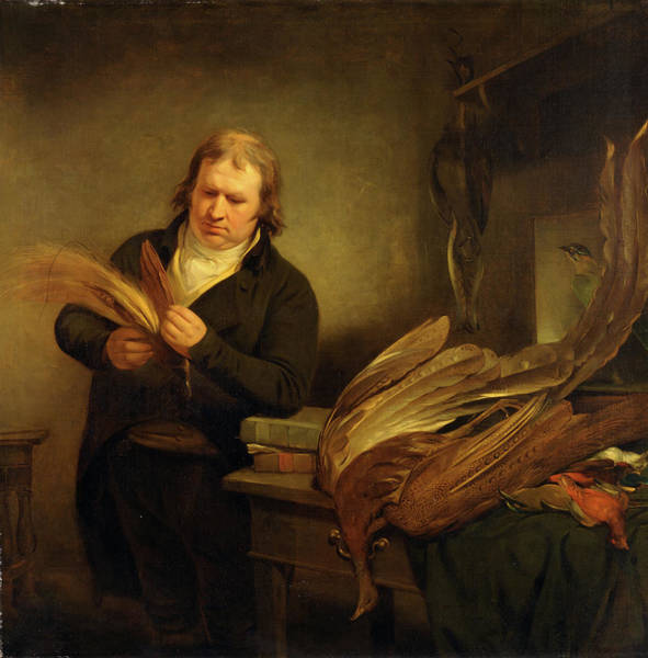 Drawers Painting - An Ornithologist, Probably John Latham An Ornithologist by Litz Collection
