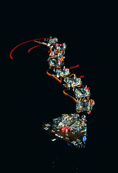 0 Photograph - Analogue Robot Snake by Peter Menzel/science Photo Library
