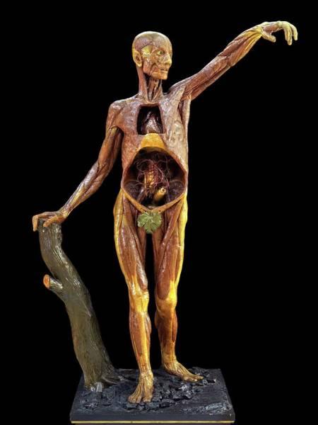 Anatomical Model Photograph - Anatomical Model by Javier Trueba/msf