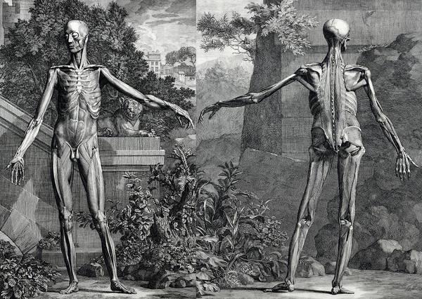 Wall Art - Digital Art - Anatomium Corpus by Daniel Hagerman