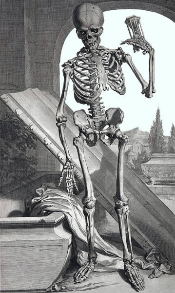 Wall Art - Digital Art - Anatomium Sceletus by Daniel Hagerman