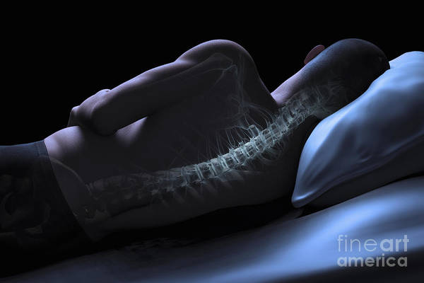 Photograph - Anatomy Of The Spine by Science Picture Co
