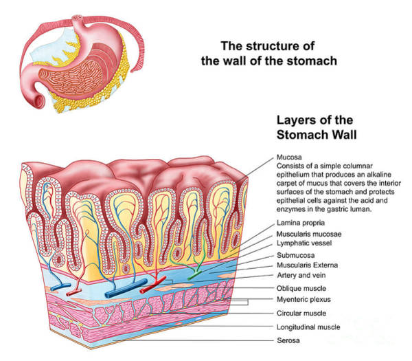 Plexus Digital Art - Anatomy Of The Structure And Layers by Stocktrek Images
