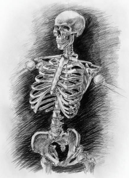 Human Bone Wall Art - Drawing - Anatomy Study Mister Skeleton by Irina Sztukowski