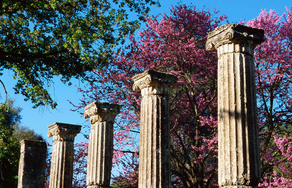 Ancient Greek Photograph - Ancient Columns At Ruins Of Olympia by George Tsafos