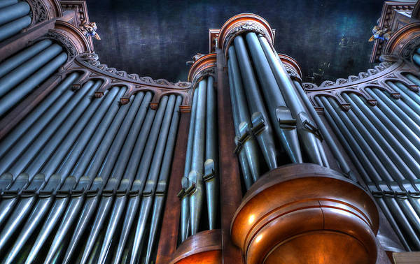 Photograph - Ancient Music by Jenny Setchell